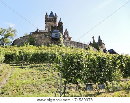 Vineyards Under Cochem Imperial Castle, Moselle