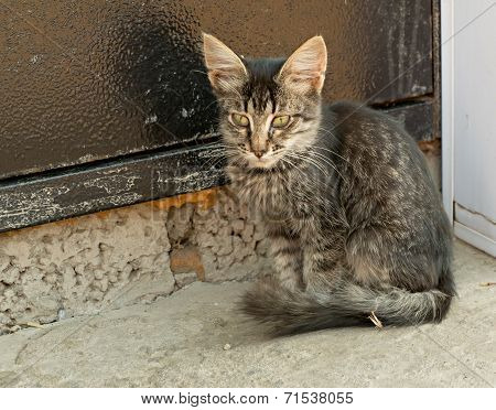 Tabby homeless kitten sitting in front of the Iron Door poster