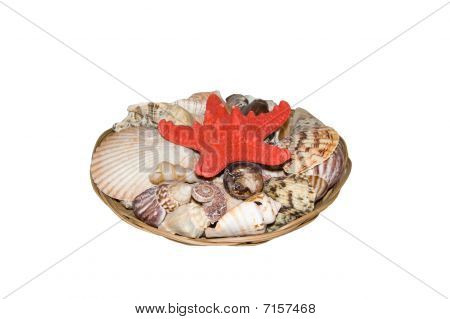 A Basket Of Seashells On A White Background