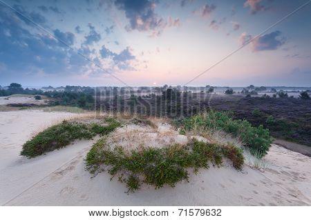 misty summer sunrise over sand dune Drents-Friese Wold NEtherlands poster