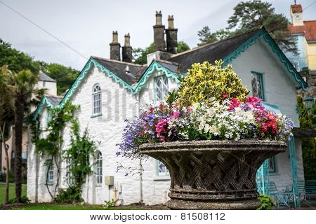 Flowers And A House