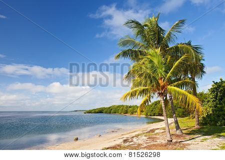 Palm trees ocean and blue sky on a tropical beach in Florida