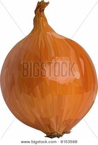 Vector onion.