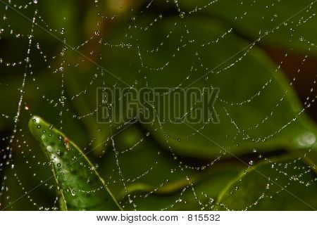 Spider's web with dew.