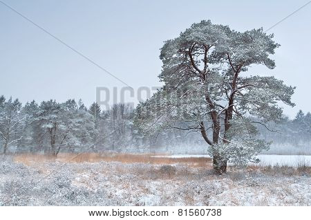Tree And Lake In Winter Snow