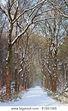 Path In White Snow Winter Forest