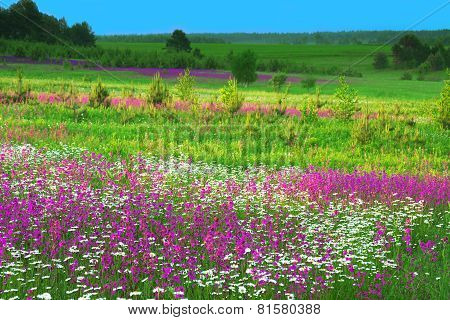 Summer  Landscape With  Flowers On A Meadow And  Sunset
