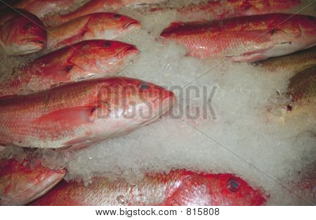 fish on ice poster