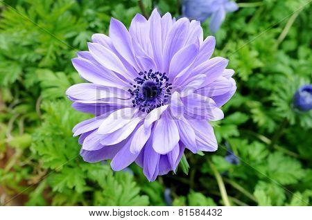 Mona Lisa Blush Flower