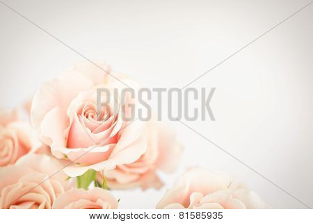 Peach Rose Cluster  With Vignette