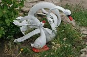Swan and a baby bird - sculptural group of an autotire cover poster