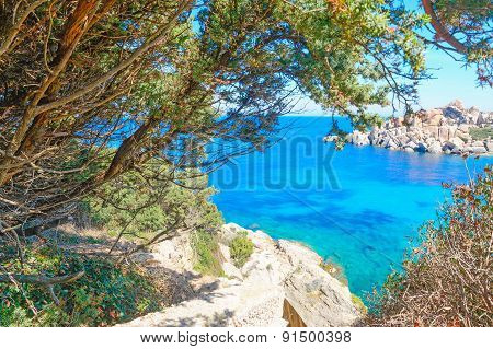 Pine Trees And Rocks By The Sea