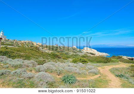 Plants By The Sea In Capo Testa