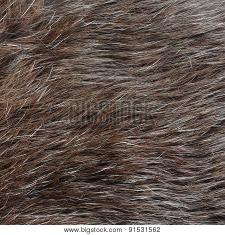 Real Rabbit Fur Texture Or Background
