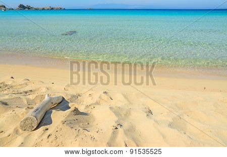 Driftwood By The Shore In Rena Bianca