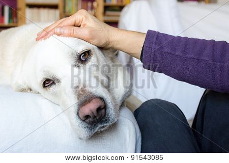 woman stroking a tender dog in her home