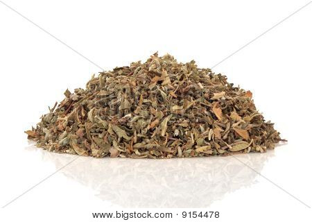 Damiana aphrodisiac herb leaves and flowers used in herbal medicine,  over white background. Modern day equivalent is viagra. Tunera diffusa poster