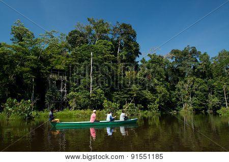 Unidentified tourists paddling a canoe in the amazon rainforest, Yasuni National Park, Ecuador
