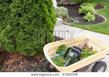 Using A Hedge Trimmer To Trim Arborvitaes