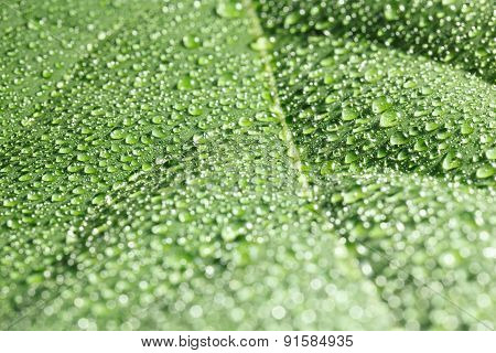 Leaf Covered With Rain Drops