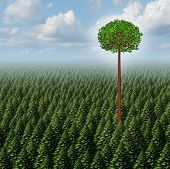 Stand out from the crowd concept as a forest of evergreen trees with a successful leaf tree standing high above the competition as a business metaphor for individuality and different individual distinction to prosper as an outsider. poster