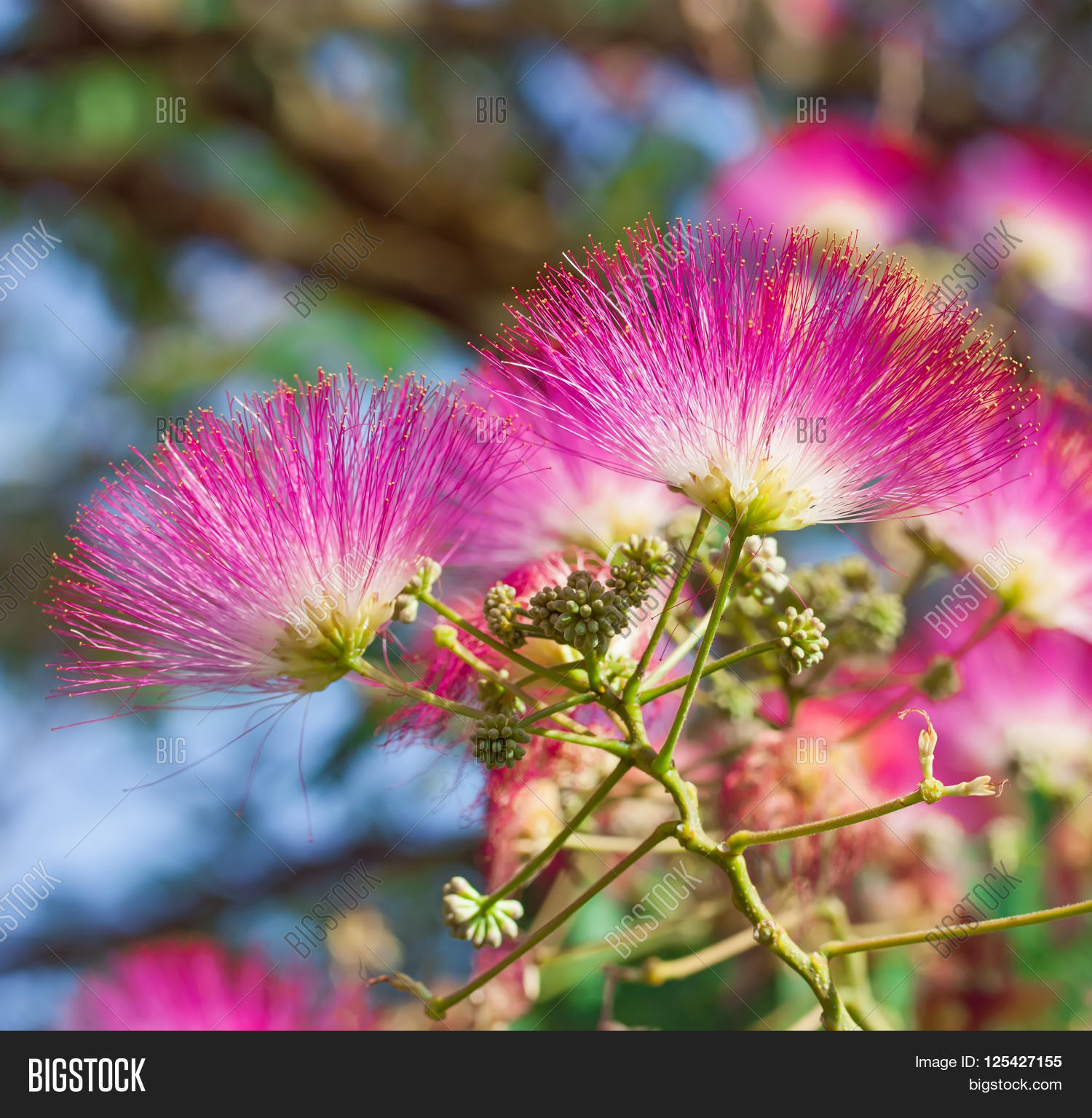 Beautiful Pink Flowers Image Photo Free Trial Bigstock