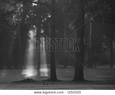 Fog Lights In The Forest