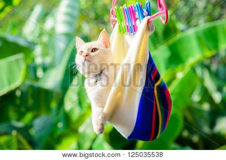 Cat playful in Knit cap hanging and looking up