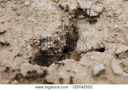 Close-up image of anthill in the soil