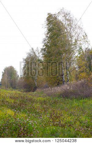 Autumn Landscape. Park in Autumn. Landscape with the autumn forest. Early Autumn