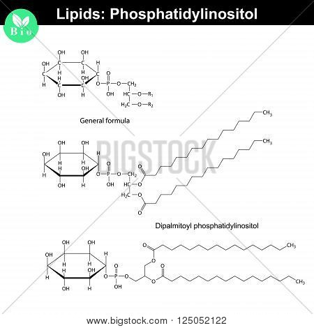 Phosphatidylinositol chemical structure molecular structures of lipids isolated on white background 2d vector eps 8