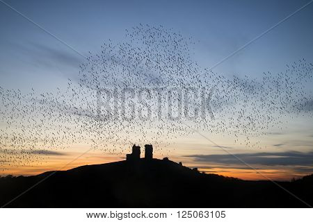 Murmuration of starlings over fairytale castle ruins in landscape