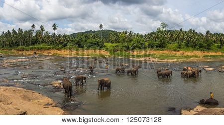 Pinnawala Elephant orphanage panorama in Sri Lanka