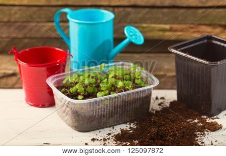 Box with seedling and agricultural tools. Young green sprouts of plants a bucket and a watering can on boards.