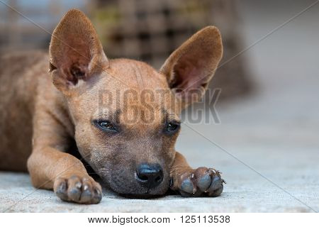Close up of Homeless brown puppy is sleeping.