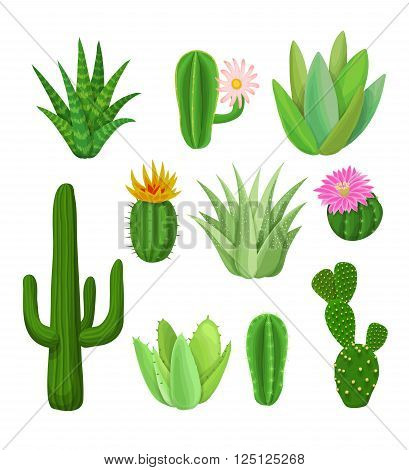 Cacti And Succulents With Flowers.