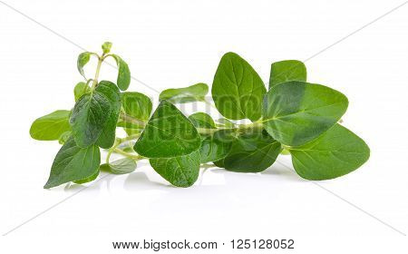 Fresh origano branch leaf on white background