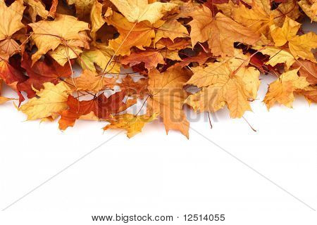 autumn leafs isolated