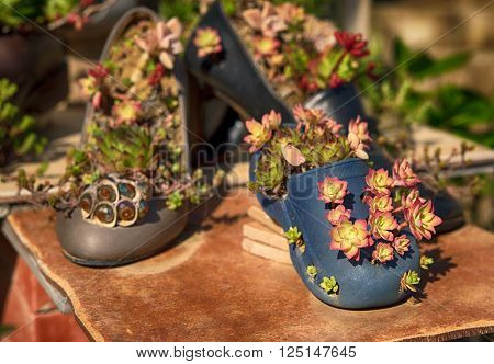 Different old shoes with plants inside, garden with succulents, daylight