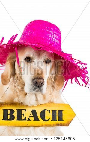 Golden Retriever with pamela and sign indicating the beach