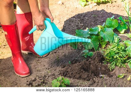 Summer work in the garden. Closeup woman replanting flowers. Human hands holds can pouring water to new hole for plant in garden
