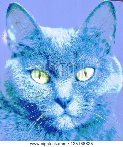 Portrait of cat. Animalistic print. Pop art style.