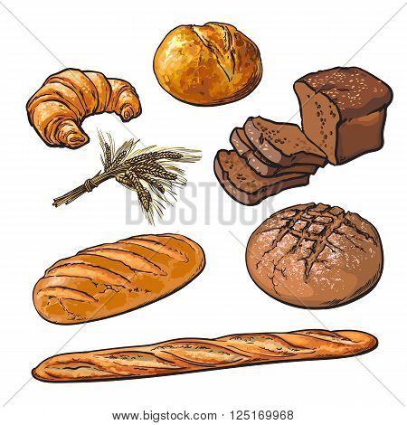 Set bread products, pastries vector on a white background, sliced loaf, French baguette, rye bread, wheat branch, cutting cakes, croissants, colored sketch style hand-drawn, bakery products, rooty