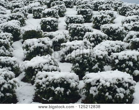 Winter snow in Stamford, Connecticut, in USA