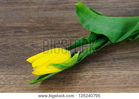 Set of Beautiful Yellow tulips on Wood Background