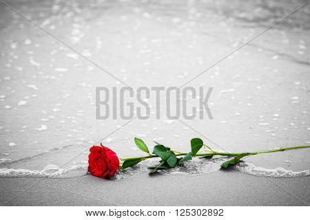 Waves washing away a red rose from the beach. Concept of romantic love, romance, but may also symbolize a loss, melancholy, memory of the past etc. Color against black and white