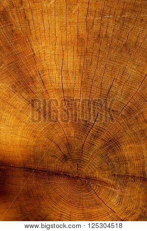 Orange tree trunk texture with year rings