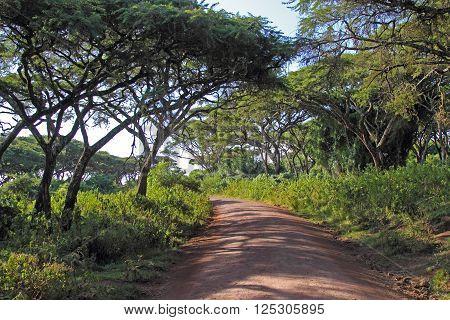 Road Along The Forest Of Ngorongoro