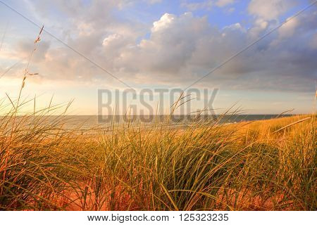 Lake michigan dune grasses