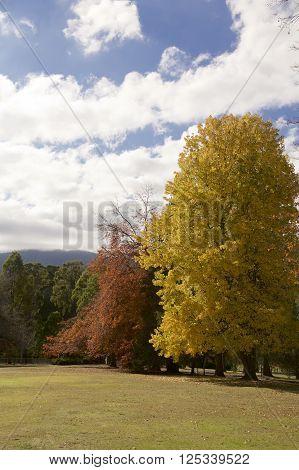 Autumn Trees in a garden in Maryville Melbourne Australia